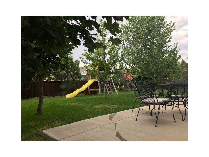 Mature Trees in BackyardSummer